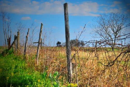 Country Fence Photo
