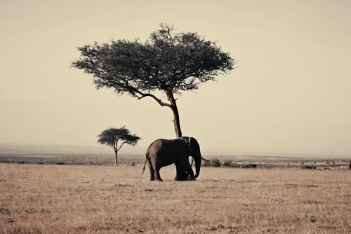 Photo of an Elephant by a tree